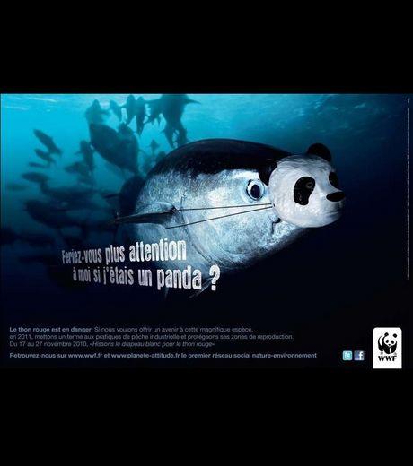 Connu Quelques campagnes du WWF pour la protection des animaux. · Wwf3 OP97